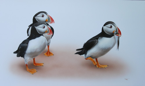 puffin painting by Carl Thompson