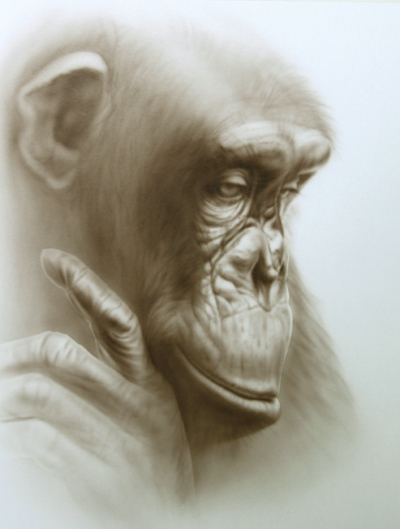 chimpanzee portrait deep thought