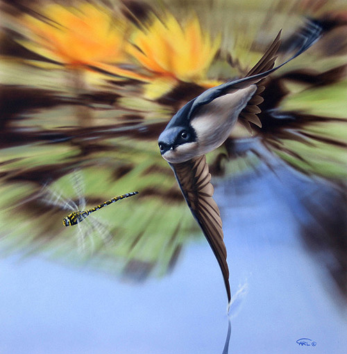 house martin painting in hot pursuit