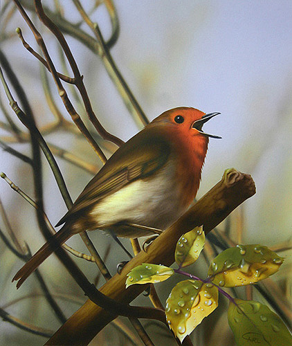 robin painting by Carl Thompson