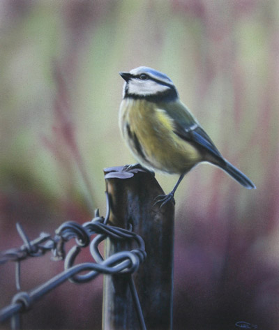Blue tit painting by Carl Thompson